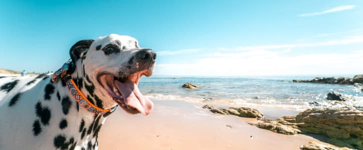 Lección de salud impartida por un perro